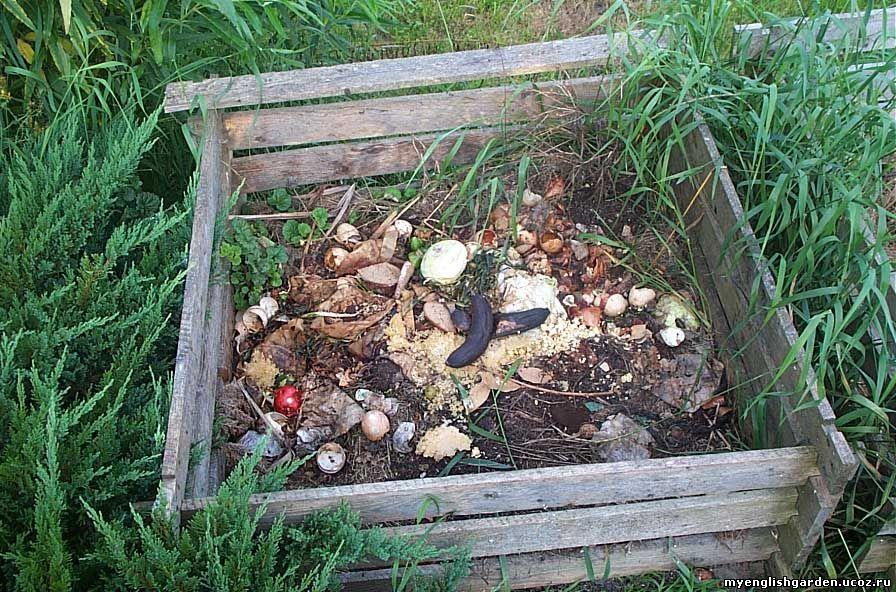 Kompost - bezcenny!