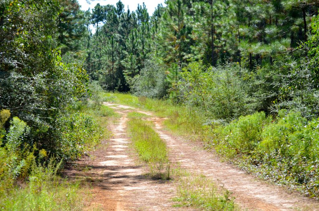 Rembertów - nowe ścieżki rowerowe