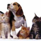 Czipujemy psy i koty